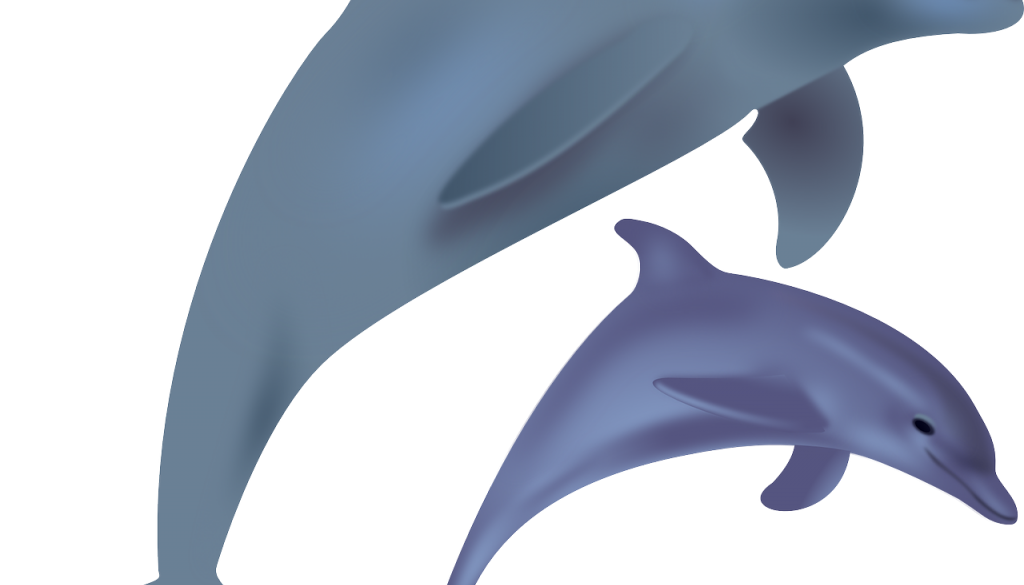 dolphins-158219_1280